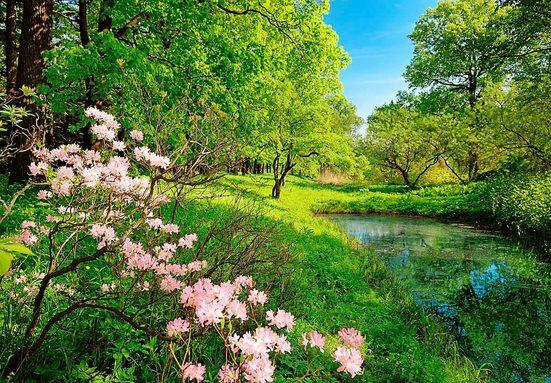 Fototapete »Park im Frühjahr«