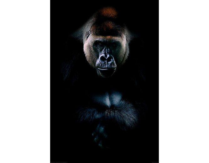 Home affaire Deco Panel »Gorilla«, 60/90 cm