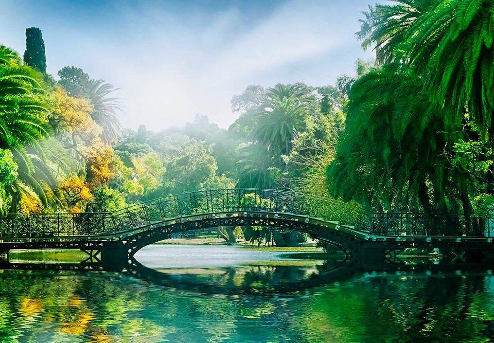 Home affaire Fototapete »Brücke im Sonnenlicht«, 366/254 cm in grün