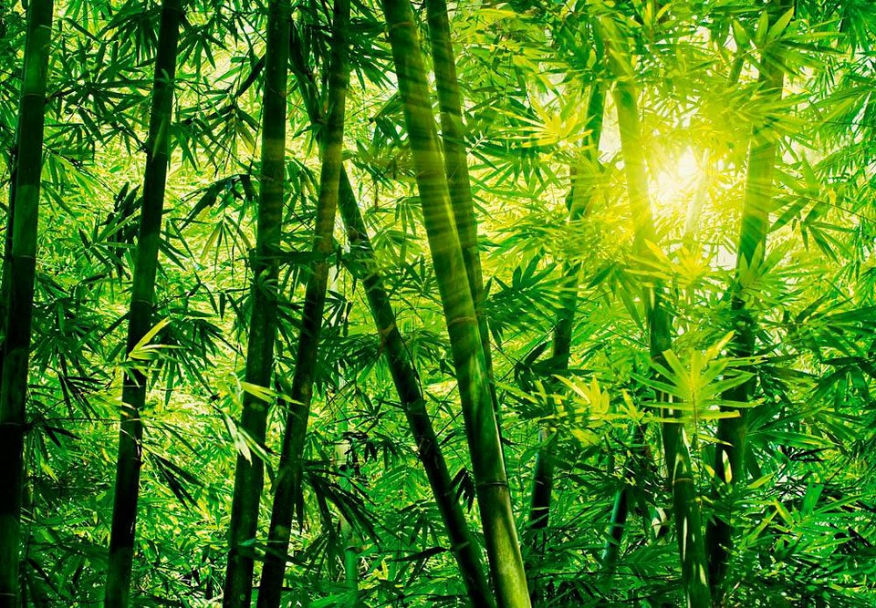 Home affaire Fototapete »Bambus Wald«, 366/254 cm in grün