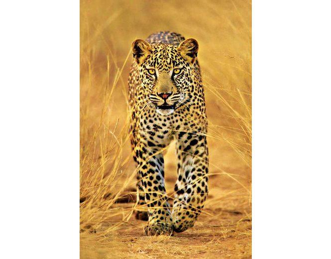 Home affaire, Deco Panel, »Leopard«, 60/90 cm