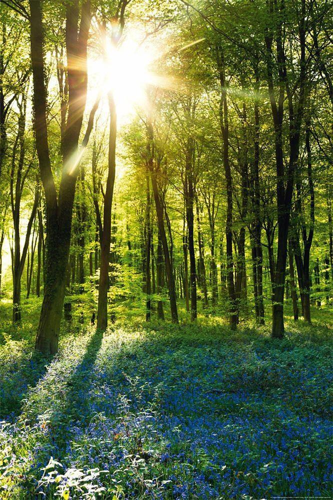 Premium Picture, Deco Panel, »Wald mit Sonne«, 60/90 cm