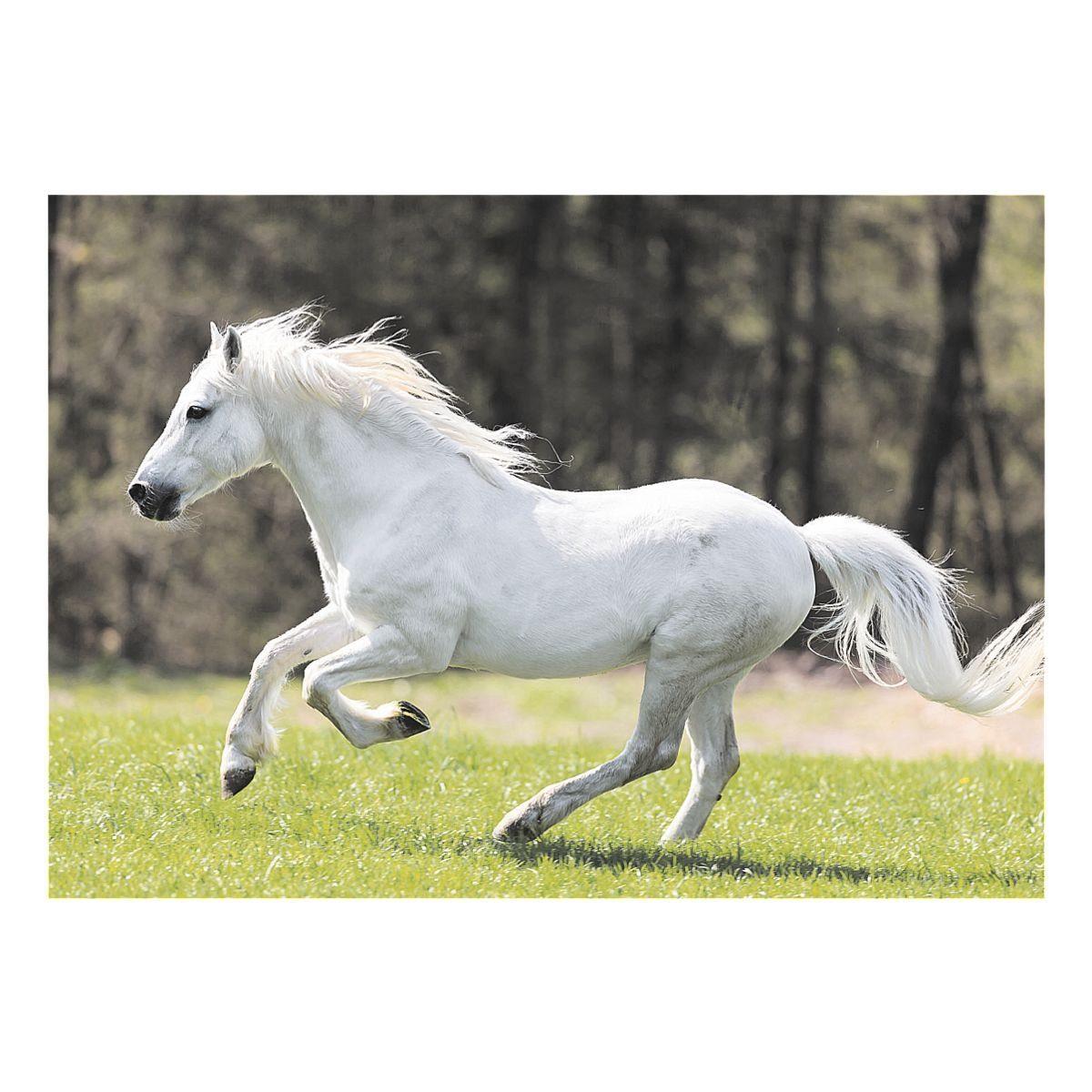 Veloflex Schreibunterlage »Pony«