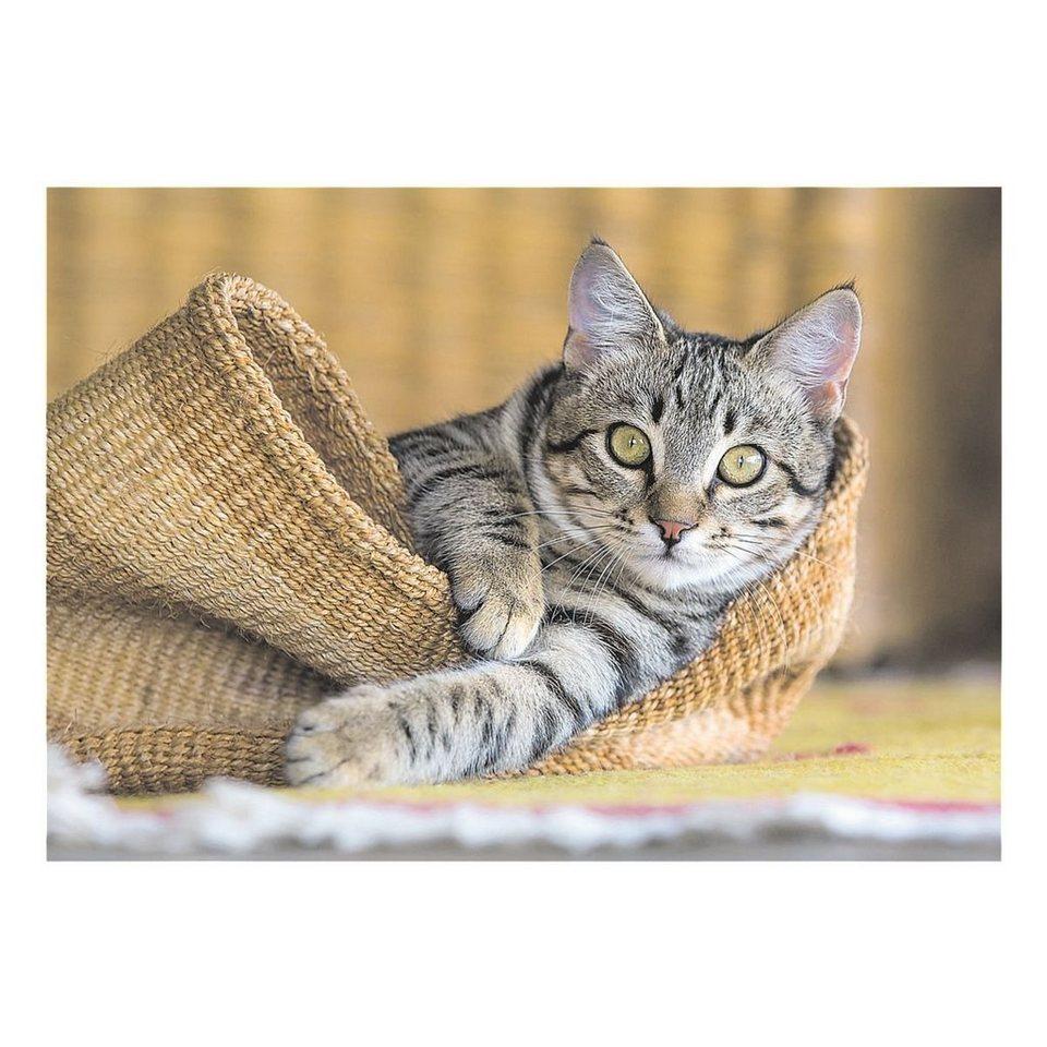 Veloflex Schreibunterlage »Katze«