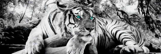 Reinders! Wandbild »Tigerblick Wandbild Tiger - Raubtier - Wandbild Wohnzimmer - Wandbild«