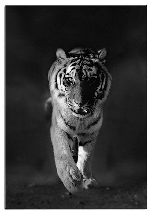 Glasbild »Tiger« in schwarz