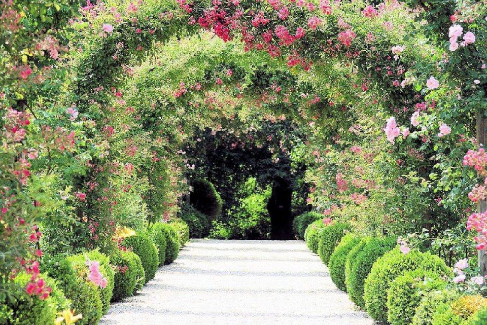 Home affaire Fototapete »Rose Arch Garden«, 350/260 cm in grün/rosa
