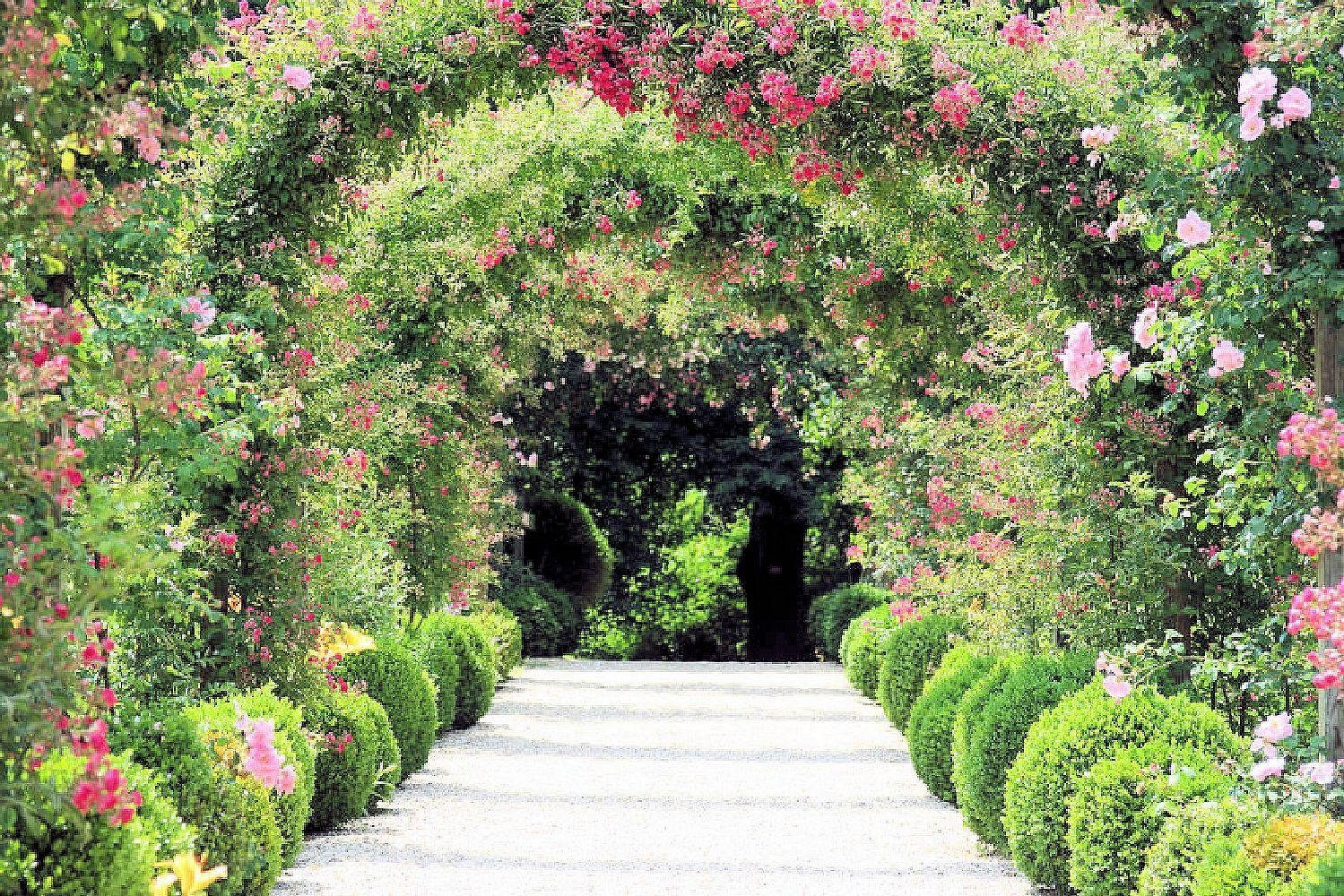 Home affaire Fototapete »Rose Arch Garden«, 350/260 cm