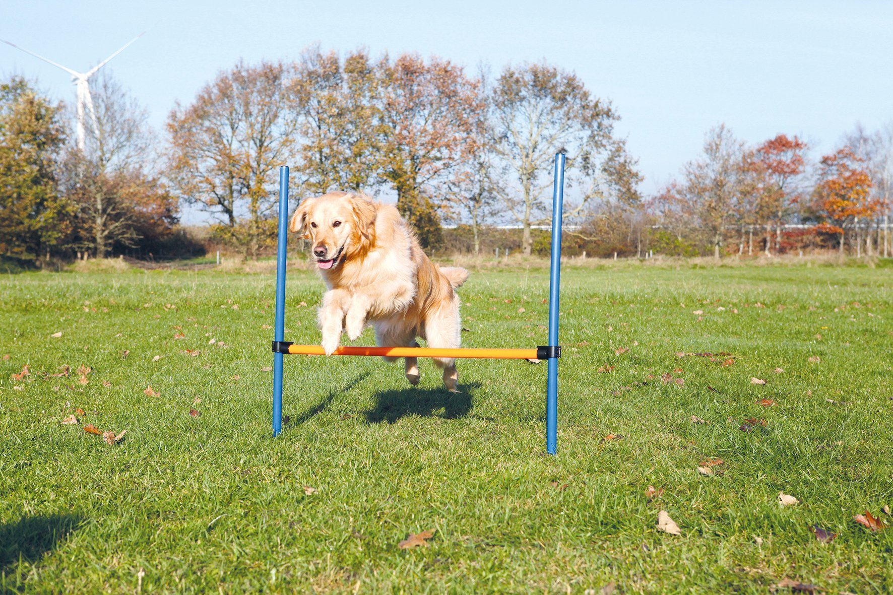 Hunde Agility Hürde, B/H/Ø: 123/115/3 cm