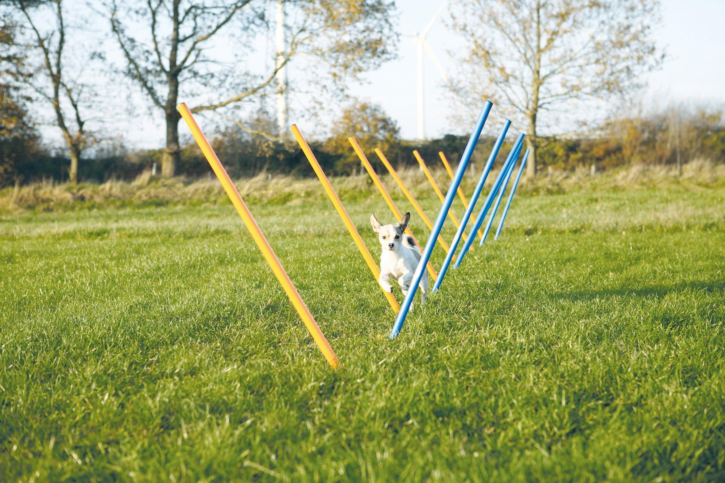 Hunde Agility Slalom, H/Ø: 115/3 cm
