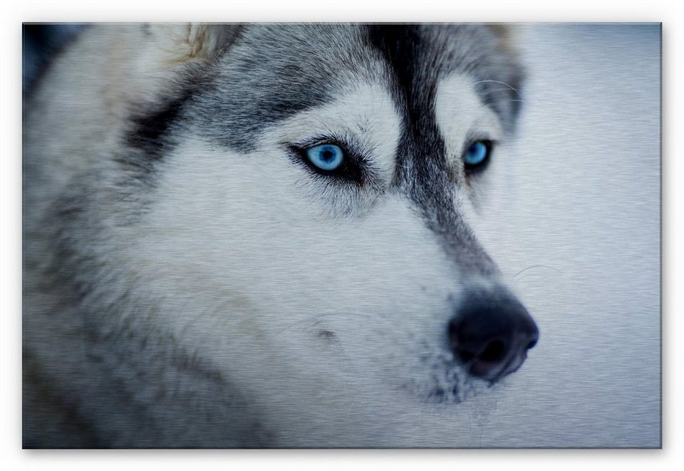 Home affaire Alu-Dibond Bild »Eisblaue Augen«, 60/40 cm in weiß/grau