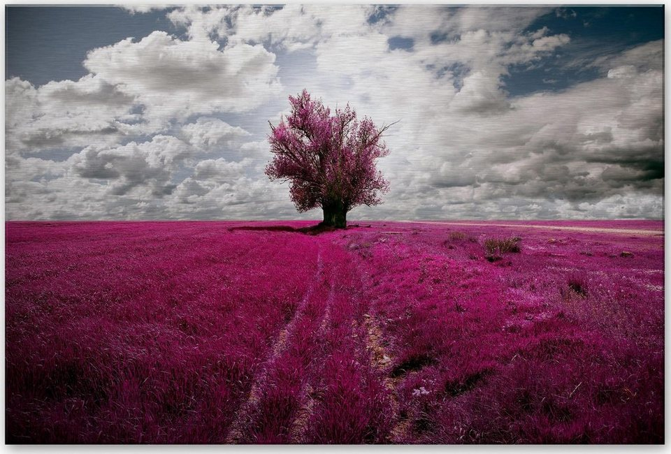 Home affaire Alu-Dibond Bild »The Lonely Tree«, 60/40 cm in pink/weiß