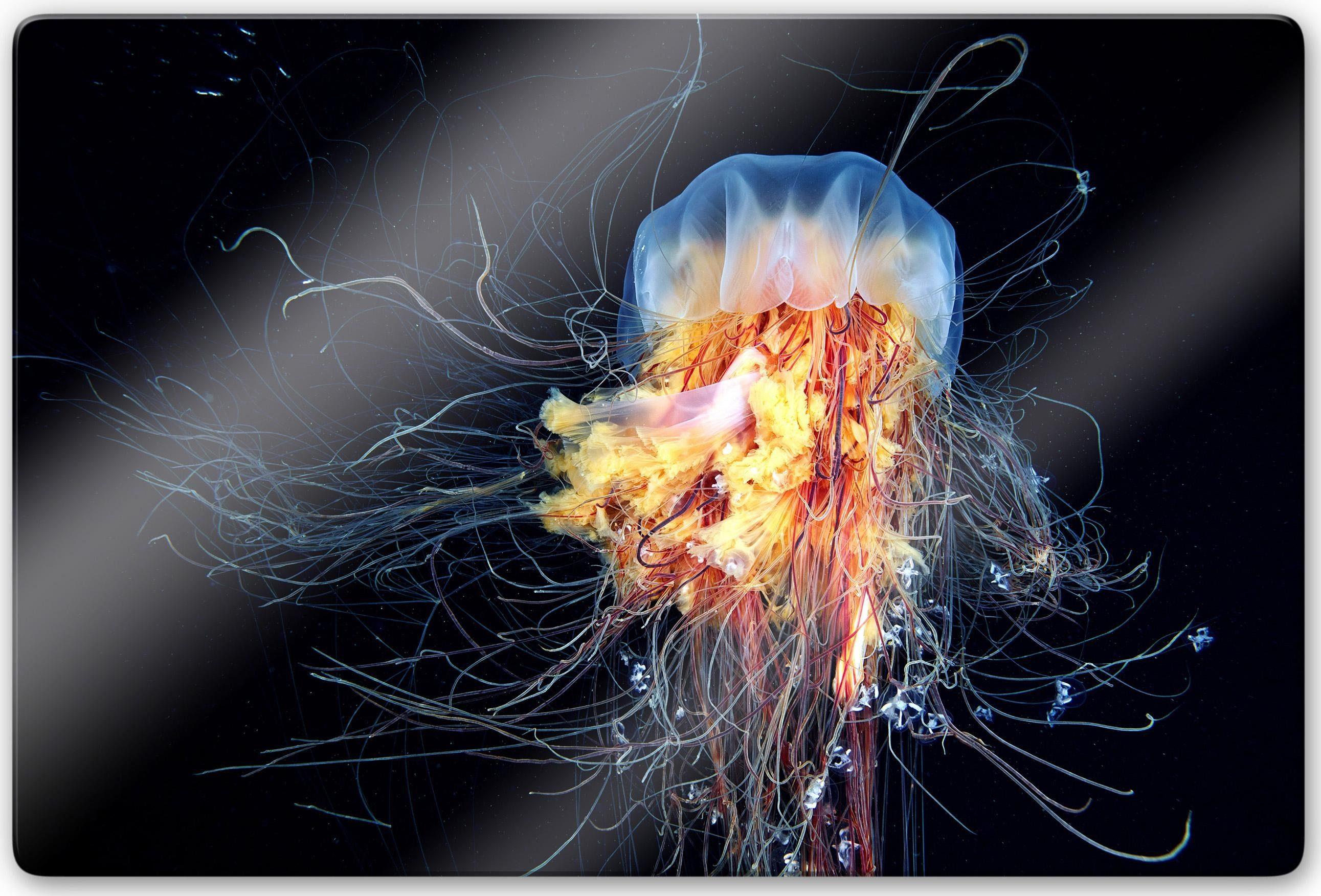 Home affaire Glasbild »Semenov - Amazing Jellyfish«, 80/60 cm