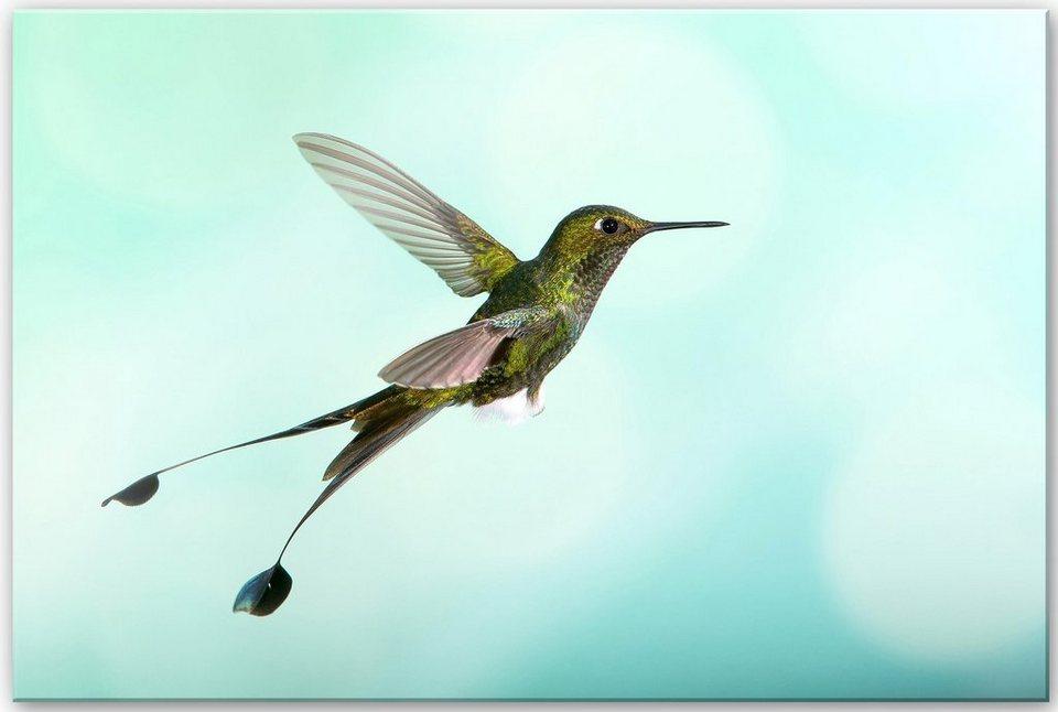 Home affaire Acrylglasbild »Reusens - Flying Hummingbird«, 60/40 cm in türkis