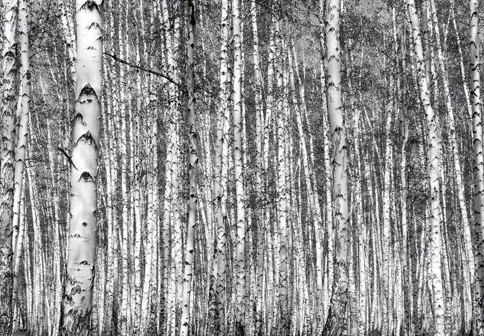 Eurographics Fototapete »Birch Forest«, 366/254 cm in grau