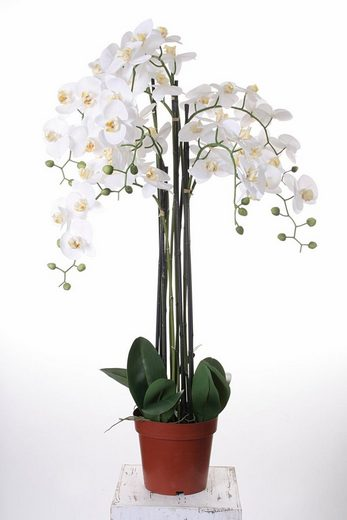 Kunstorchidee »Orchidee XXL«