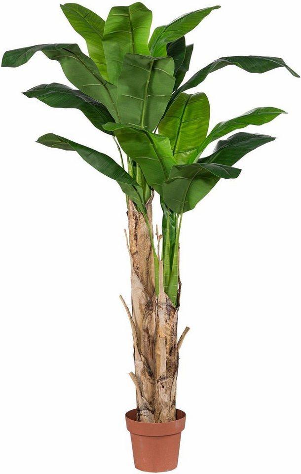 Home affaire Kunstpflanze »Bananenpflanze« in grün