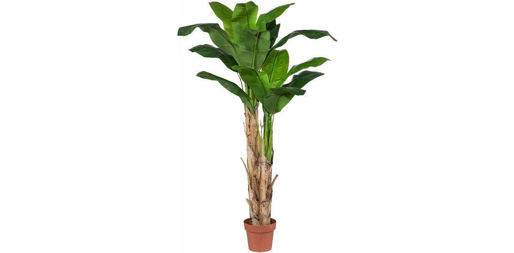 Home affaire Kunstpflanze »Bananenpflanze«