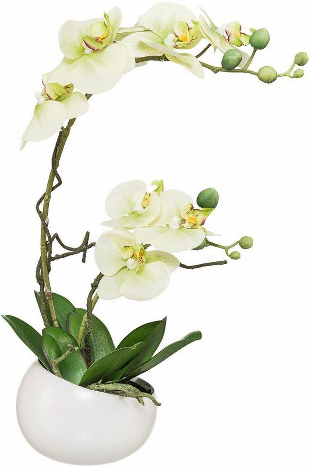 Home affaire Kunstblume »Orchidee« in grün