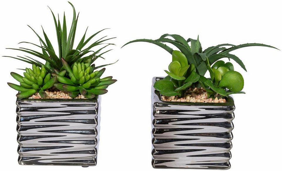 Home affaire Kunstpflanze »Sukkulenten« in grün