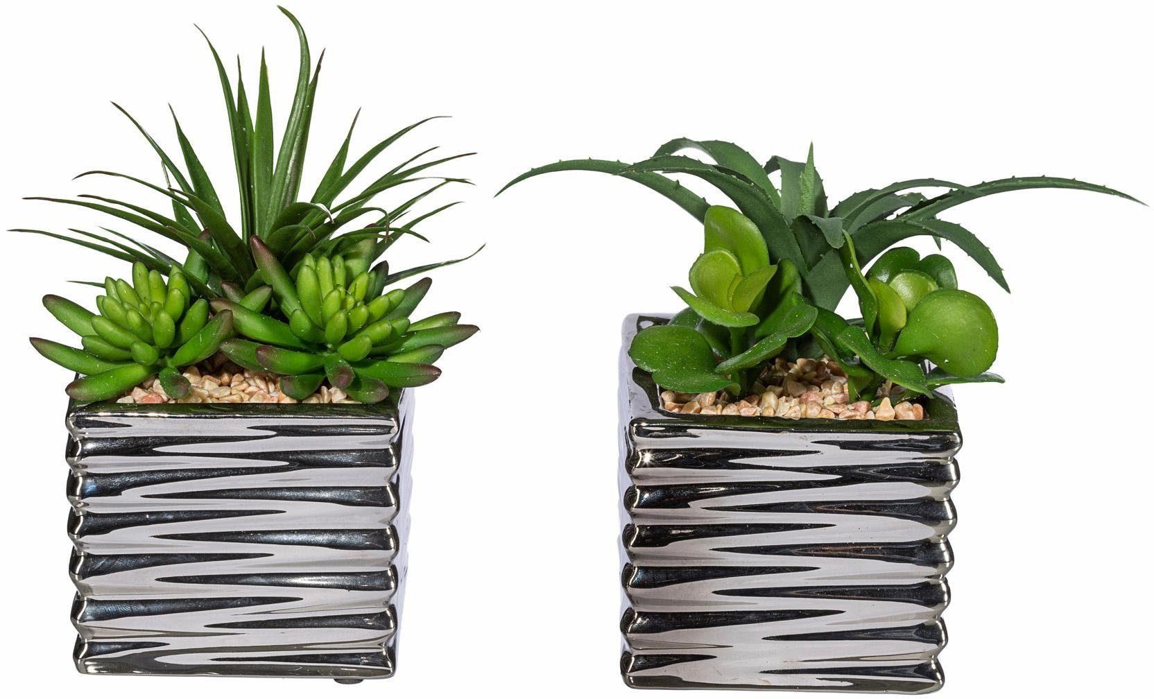 Home affaire Kunstpflanzen-Set (2-tlg.) »Sukkulenten«