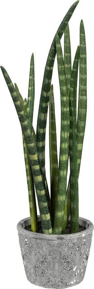 Home affaire Kunstpflanze »Sanseveria« im Zementtopf in grün