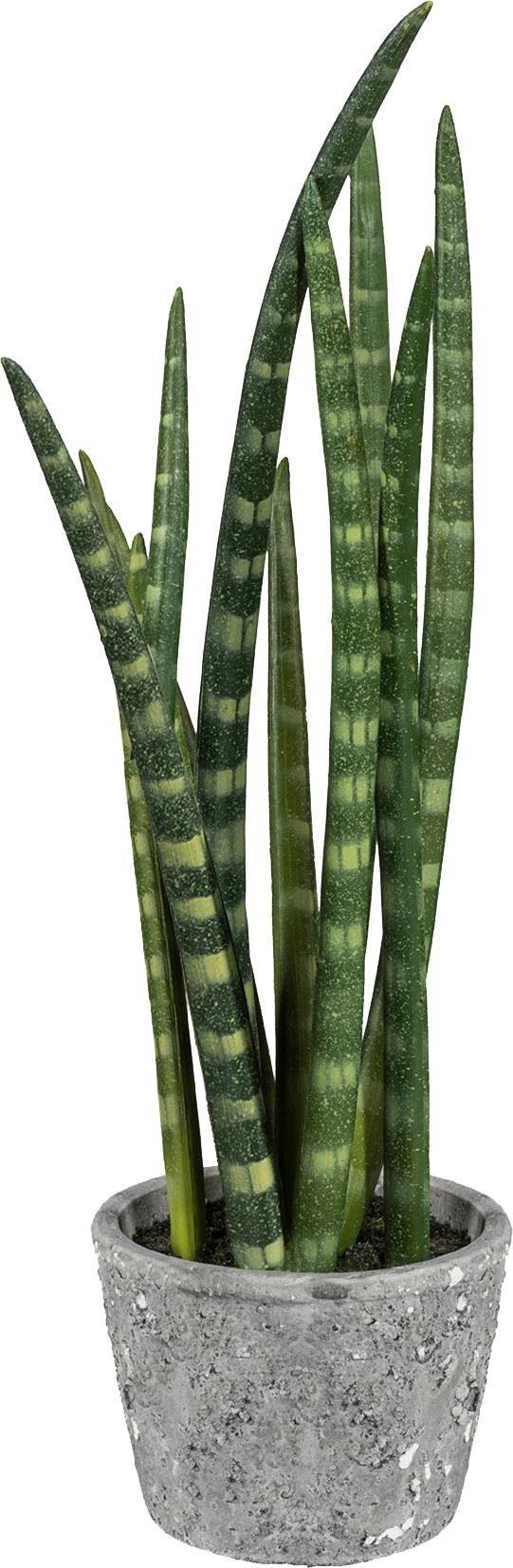 Home affaire Kunstpflanze »Sanseveria« im Zementtopf