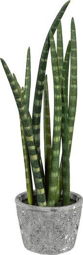 Kunstpflanze »Sanseveria«, Creativ green, Höhe 45 cm