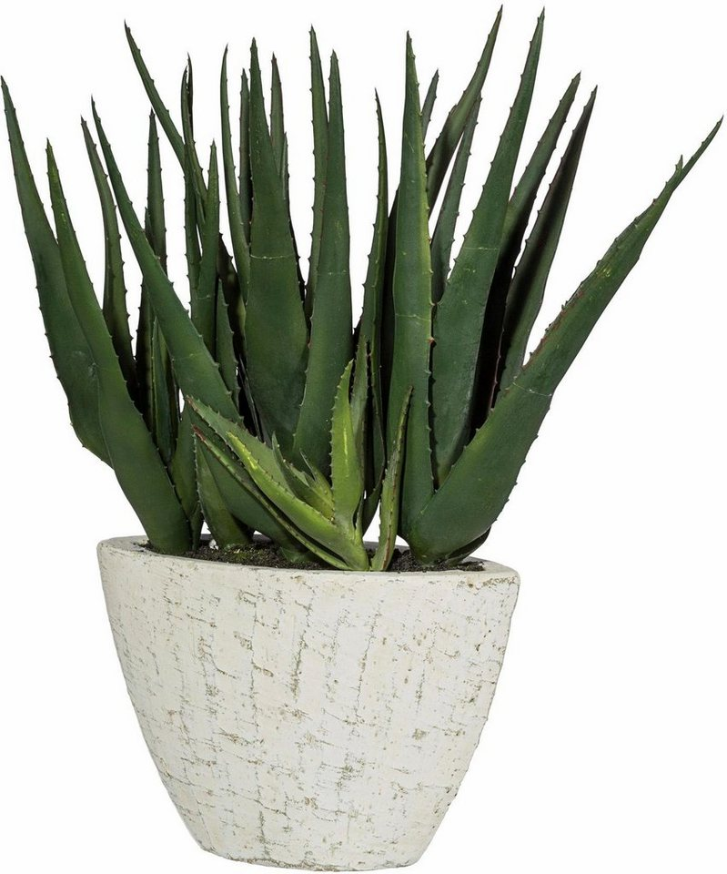 Home affaire Kunstpflanze »Aloe Vera« in grün