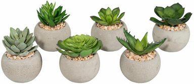 Kunstpflanze »Sukkulenten« (Set, 6 Stück)