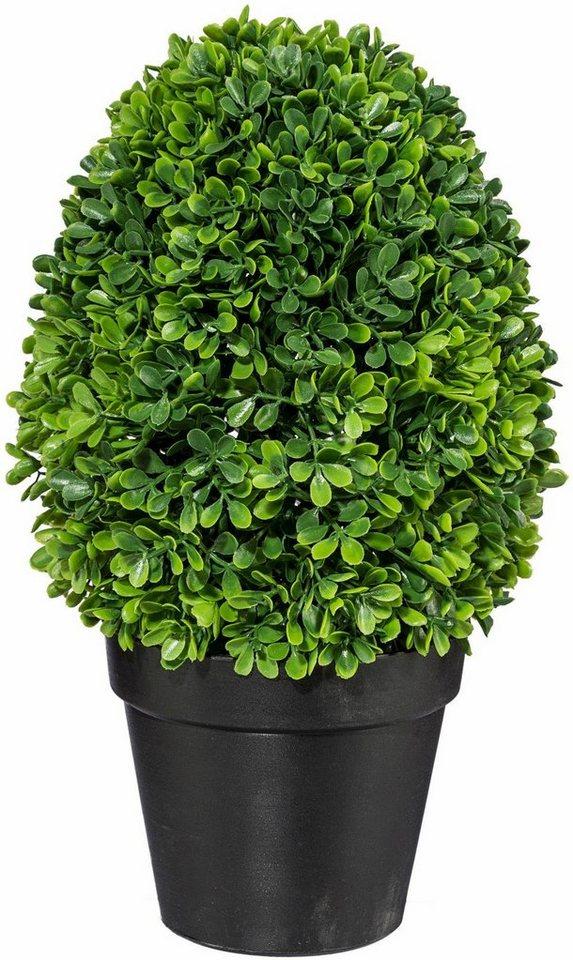 Home affaire Kunstpflanze »Buchsbaumkonus« in grün