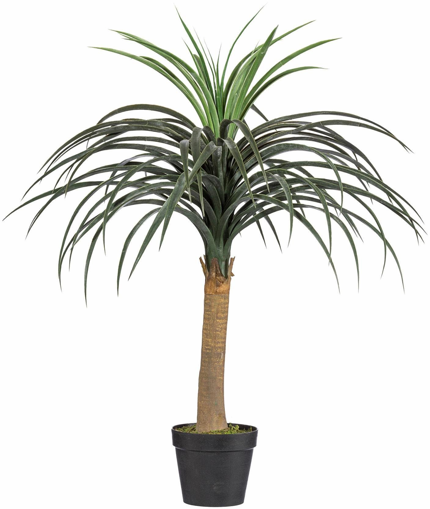 Home affaire Kunstpflanze »Dracena«