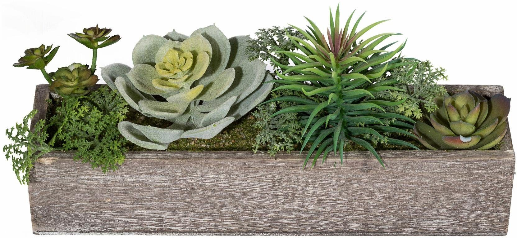 Home affaire Kunstpflanze »Sukkulenten-Arrangement«