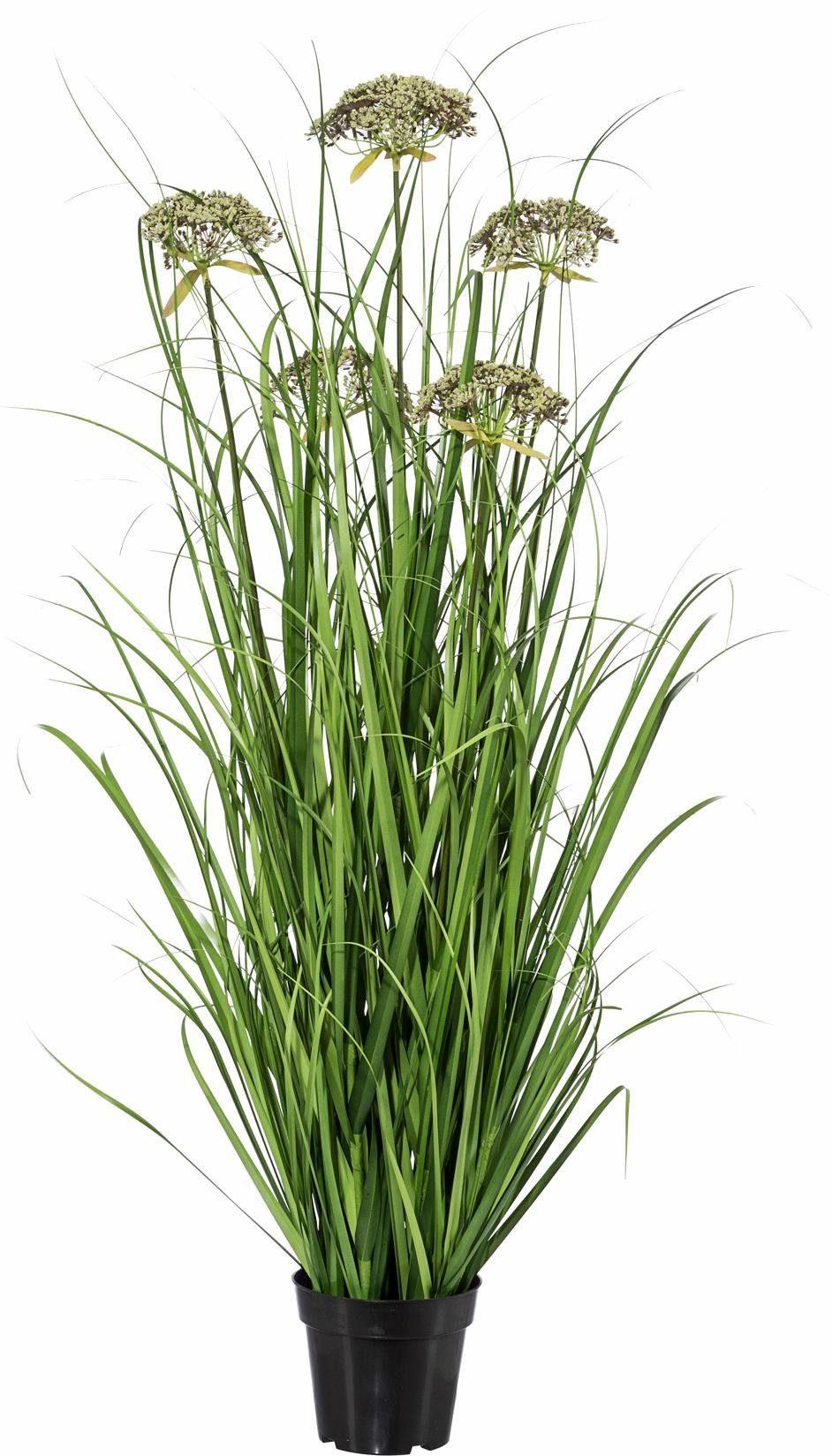 Home affaire Kunstpflanze »Gras« in Kunststofftopf