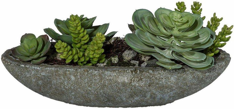 Home affaire Kunstpflanze »Echeveria-Mix« in grün