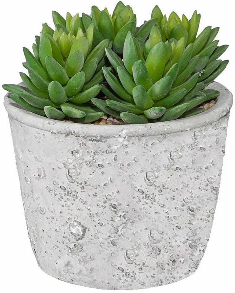 Home affaire Kunstpflanze »Echeveria« im Zementtopf in grün