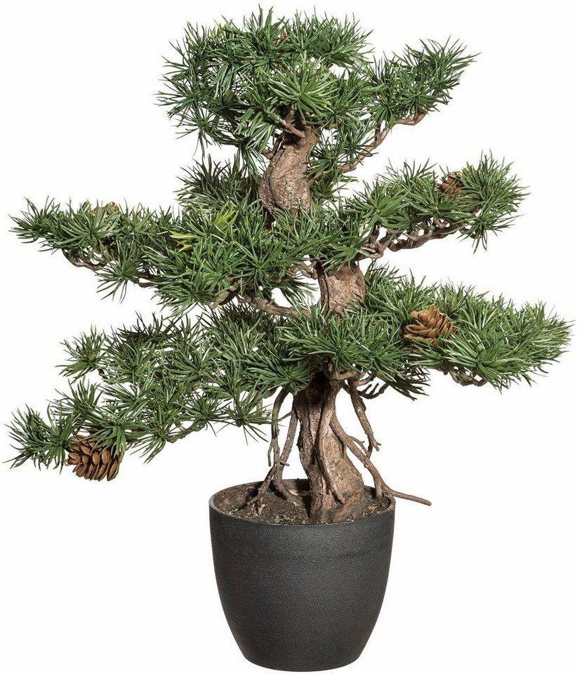 Home affaire Kunstpflanze »Bonsai Kiefer« in grün
