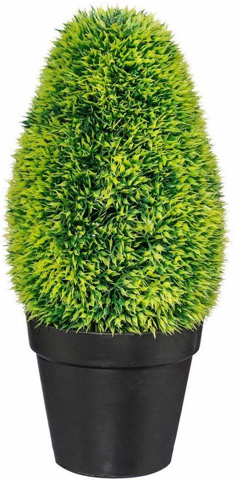 Home affaire Kunstpflanze »Graskonus« in grün