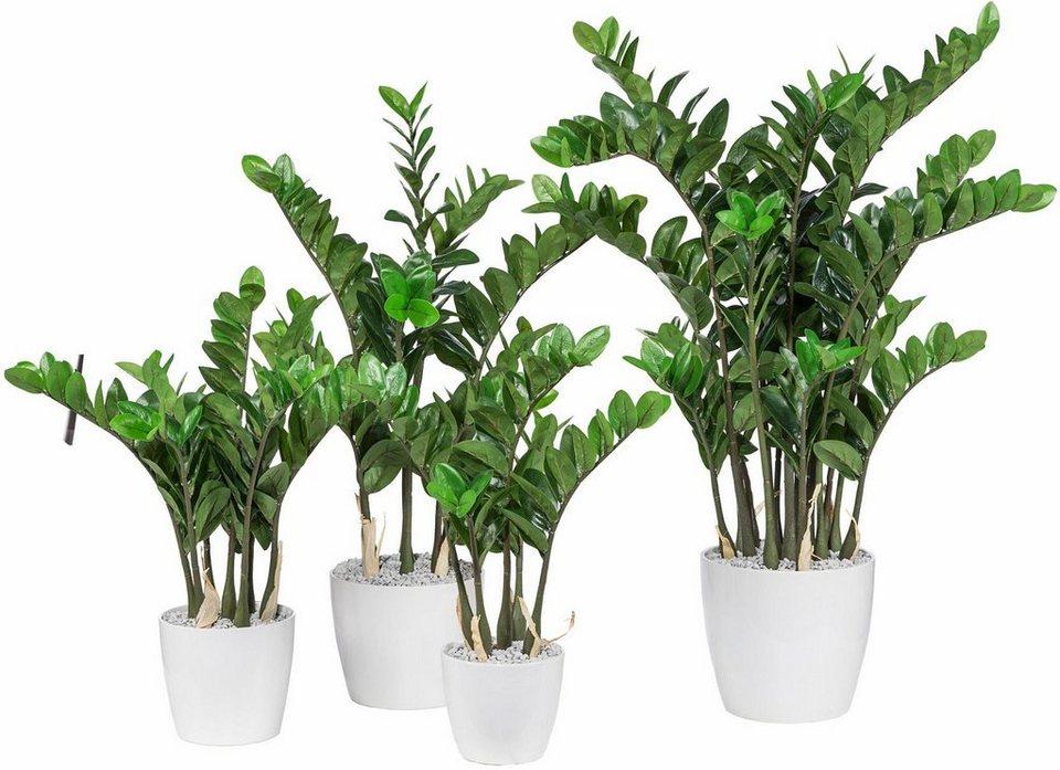 Home affaire Kunstpflanze »Zamifolia« in grün