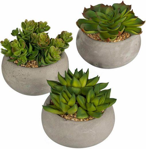 Kunstpflanze »Sukkulenten« (Set, 3 Stück)