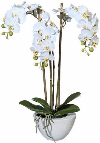Dirbtinis augalas »Mini Orchidee«