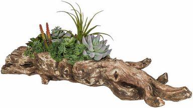 home affaire kunstpflanze sukkulenten arrangement online kaufen otto. Black Bedroom Furniture Sets. Home Design Ideas