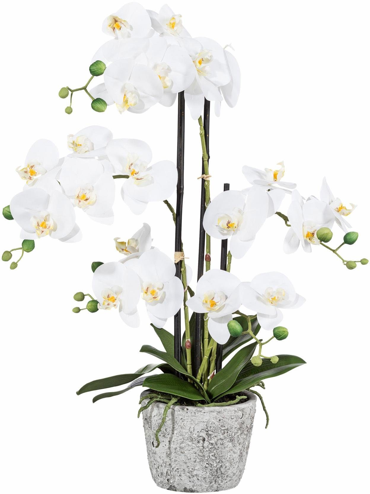 Home affaire Kunstblume »Orchidee« mit 5 Stielen im Zementtopf