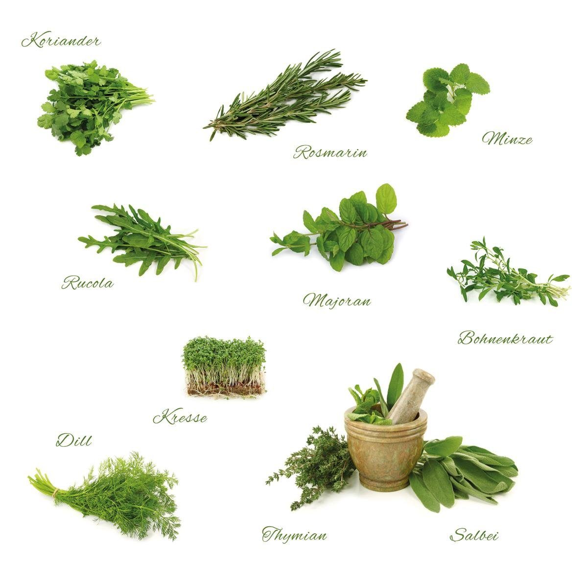 EUROGRAPHICS Wandtattoos »Different Herbs«, 110/100cm