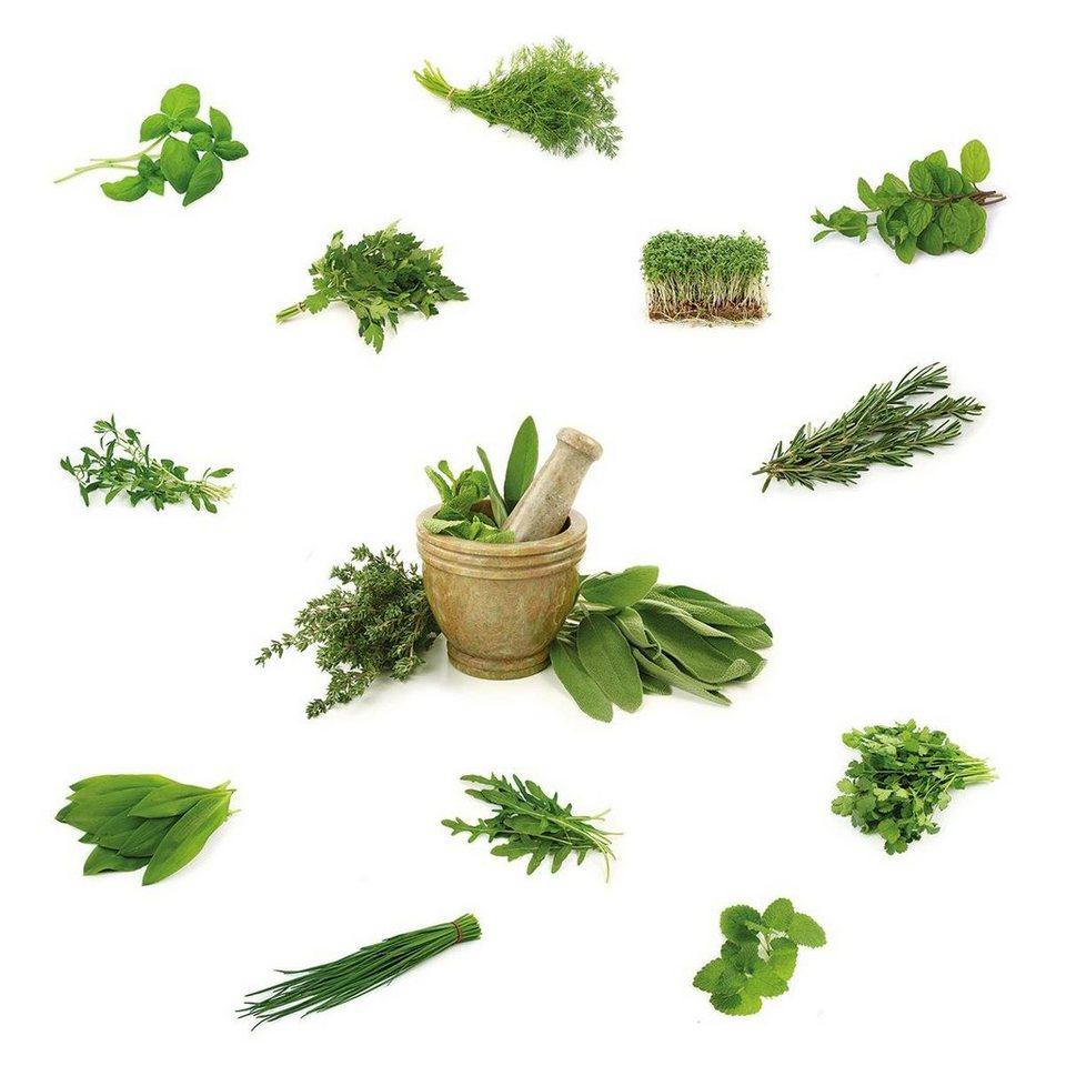Eurographics Windowsticker »Different Herbs«, 70/30cm in grün