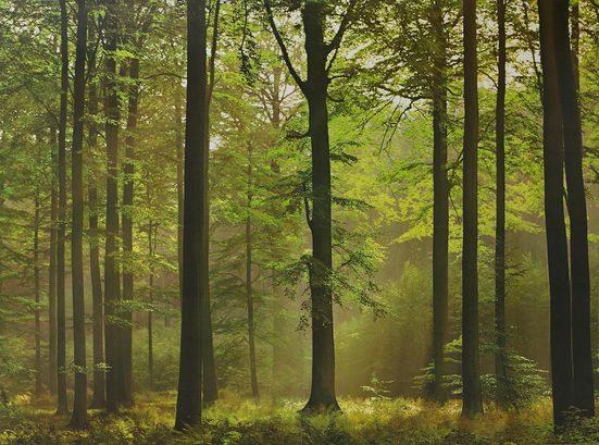 Fototapete »Autumn Forest«