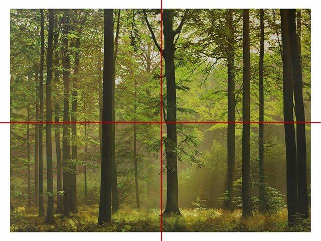 Home affaire Wandtapete, Autumn Forest, 254/366 cm
