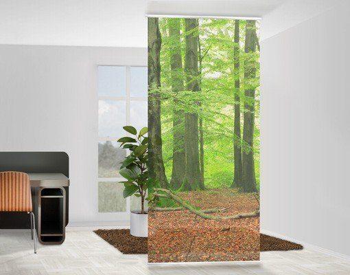 Bilderwelten Raumteiler 250x120cm »Mighty Beech Trees«