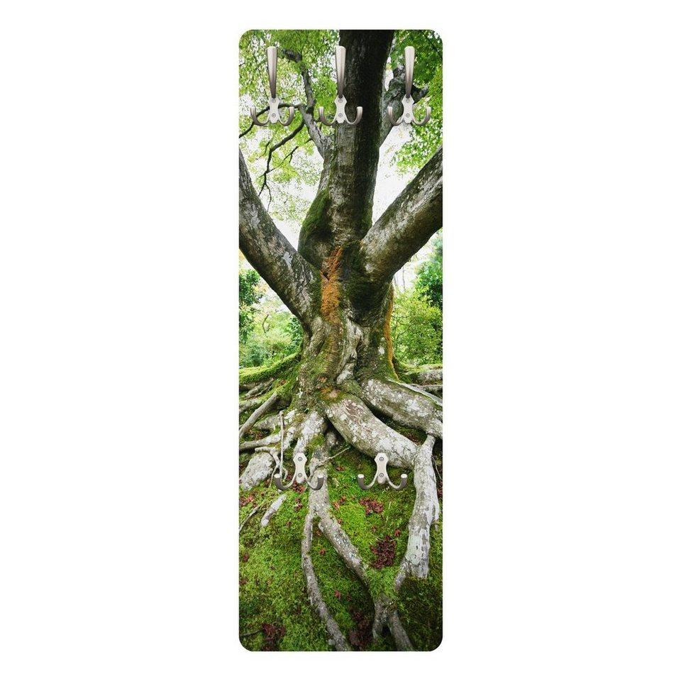 bilderwelten wandgarderobe 139x46x2cm »alter baum« | otto