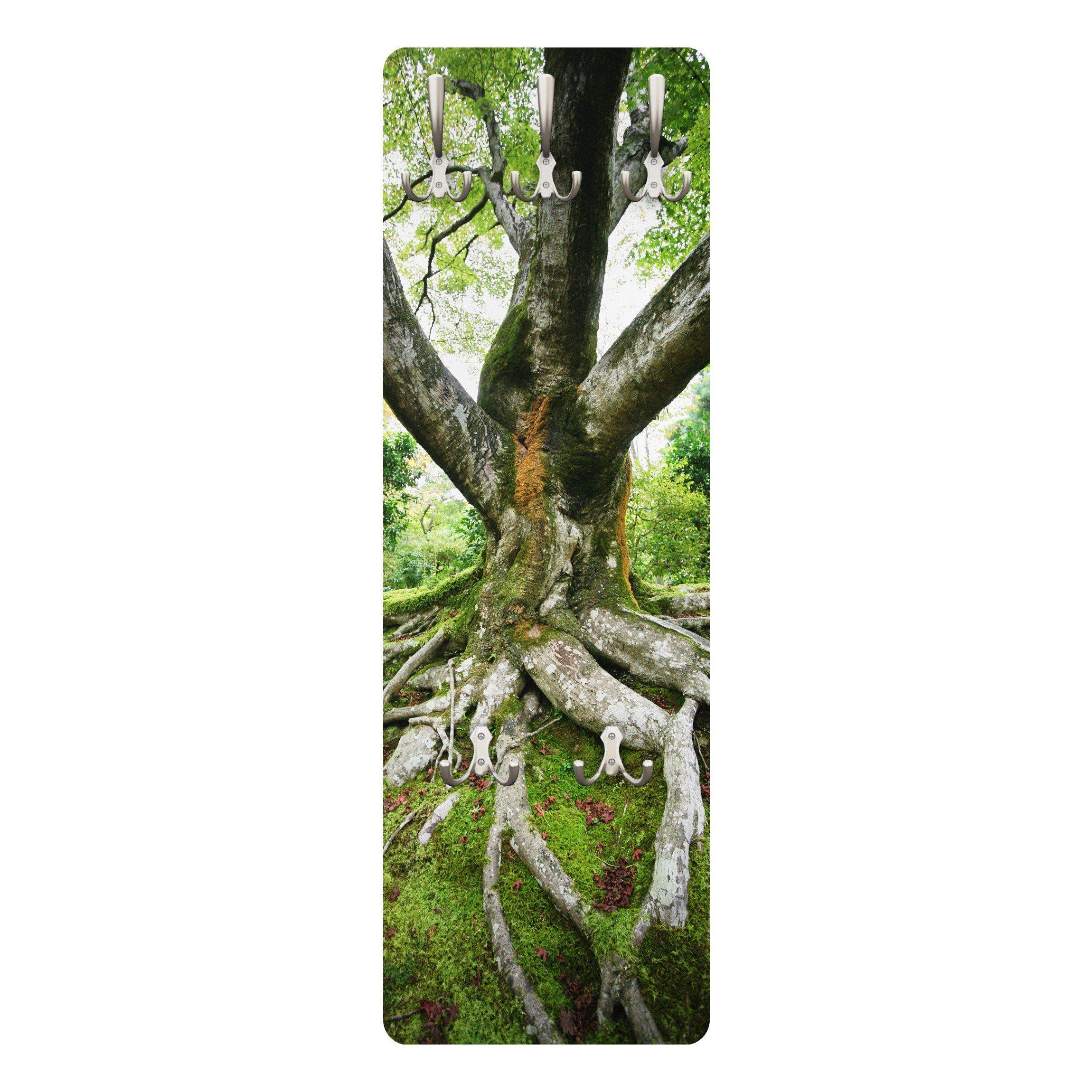 Bilderwelten Wandgarderobe 139x46x2cm »Alter Baum«